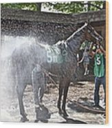 Quick Shower Before The Race Wood Print
