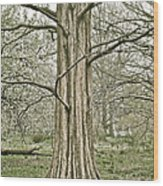 Quiet Tree Wood Print