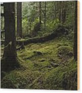 Quietly Alive Wood Print