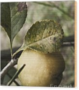Quince Fruit Wood Print