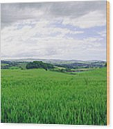 Quontoxhead Grains Wood Print