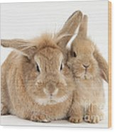 Rabbit And Baby Rabbit Wood Print