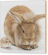 Rabbit And Dwarf Hamster Wood Print