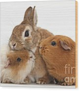 Rabbit And Guinea Pigs Wood Print