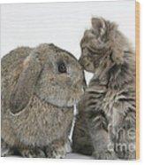 Rabbit And Kitten Wood Print