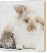 Rabbit And Squirrel Wood Print by Mark Taylor
