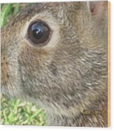 Rabbit Eye Wood Print