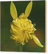Rabbit Flower Wood Print