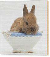 Rabbit In A China Bowl Wood Print