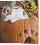 Rabbit Joins The Harvest Wood Print by Alanna DPhoto