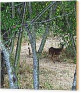 Rabbit Spying On Buck In Velvet Wood Print by The Kepharts
