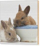 Rabbits And China Bowl Wood Print
