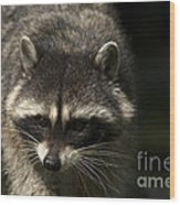 Raccoon 2 Wood Print