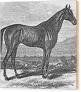 Racehorse, 1867 Wood Print