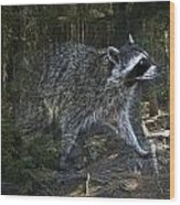 Racoon Emerging From The Woods Wood Print