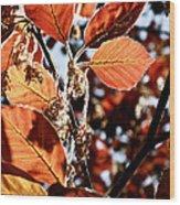 Radiant Sparkle II Wood Print by Rotaunja