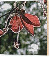 Radiant Sparkle Wood Print by Rotaunja