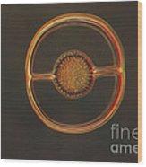 Radiolarian Lm Wood Print