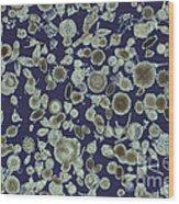 Radiolarian Ooze Lm Wood Print