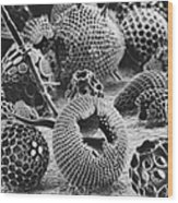 Radiolarians Sem Wood Print
