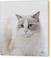 Ragdoll Cat And Keyboard Of The Pc Wood Print