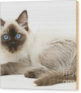 Ragdoll Kitten Wood Print