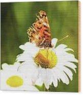 Raggedy Butterflly Wood Print