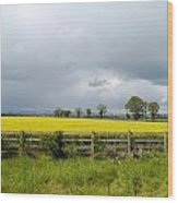 Rain Clouds Over Canola Field Wood Print