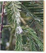 Rain Drop On Fir Tree Wood Print
