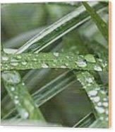Rain Drops On Grasses Wood Print