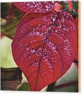 Rain Drops On Red Leaves Wood Print