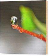 rain drops Tiny Wonder Wood Print
