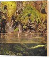 Rain Forest Pool Wood Print