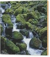 Rain Forest Stream Wood Print