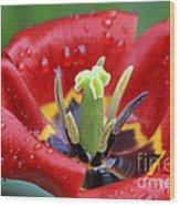 Rain Kissed Tulip 2 Wood Print