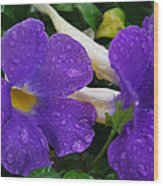 Rain On Purple Wonder Wood Print