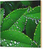 Rain Patterns Wood Print by Toni Hopper