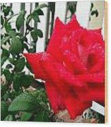 Rain Rose Wood Print