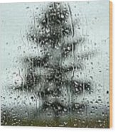 Rain Tree Wood Print