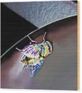 Rainbow Fly Wood Print