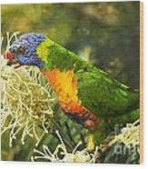 Rainbow Lorikeet 2 Wood Print