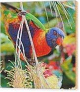 Rainbow Lorikeet 2am-8374 Wood Print