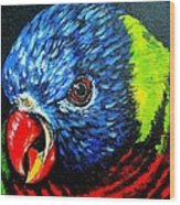 Rainbow Lorikeet Look Wood Print