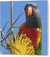 Rainbow Lorikeet Pose Wood Print
