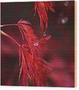 Raindrop On Japanese Maple Wood Print