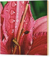 Raindrop Row Wood Print