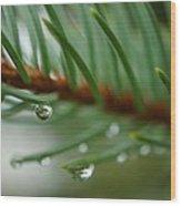 Raindrops And Fir Needles Wood Print