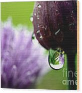 Raindrops On Chives In Bloom Wood Print