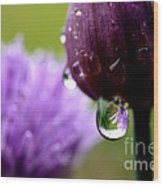 Raindrops On Chives Wood Print