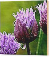 Raindrops On Chives Triptych Wood Print